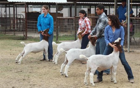 McNeil Competition Provides FFAers With Experience for Upcoming Big Shows