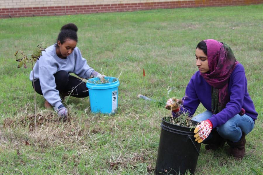Under grey skies and  cold weather, sophomores Walta Haile and Kanwal Ahemad plant native trees in the campus courtyard.